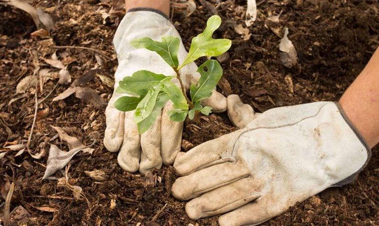 541-breve-2-plantation--arbres-citoyens-1500-DR.jpg