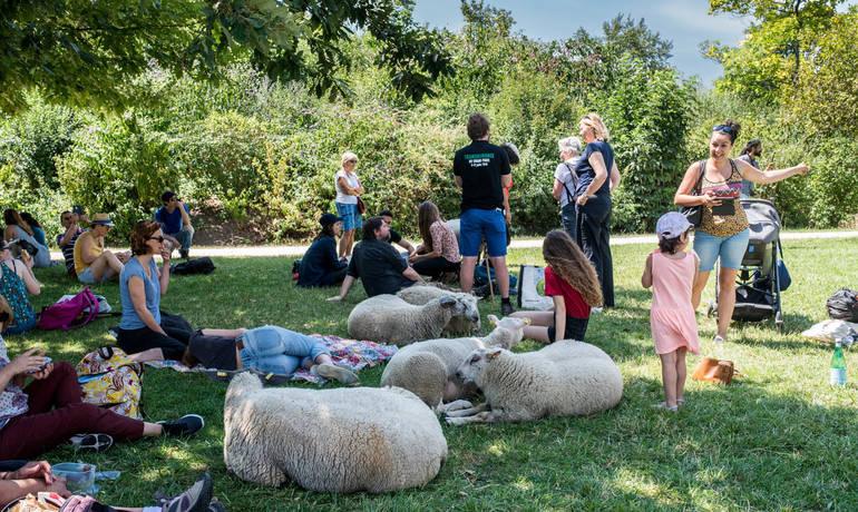 01-transhumance-moutons-1500-credit-Marie_Pierre_Dieterle-201907.jpg